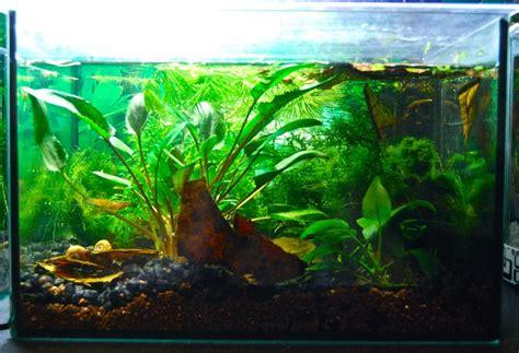 Lu Aquarium Celup mon aquarium 15l killies