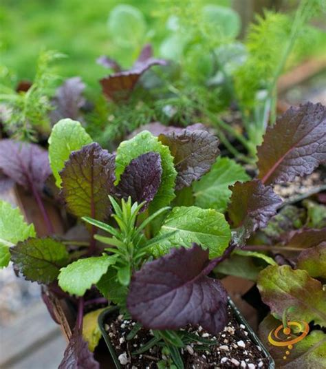 top 28 crops to plant in the fall 25 best ideas about