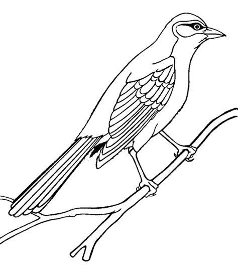 drawn mockingbird simple pencil and in color drawn