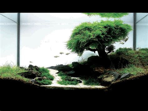 aquascaping tips 1000 images about iwagumi and the art of the aquarium on