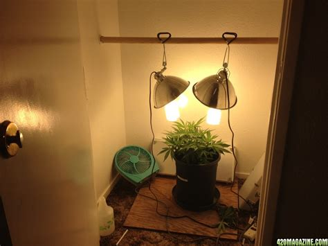 closet grow room setup 1st grow northern lights x columbian gold cfl s