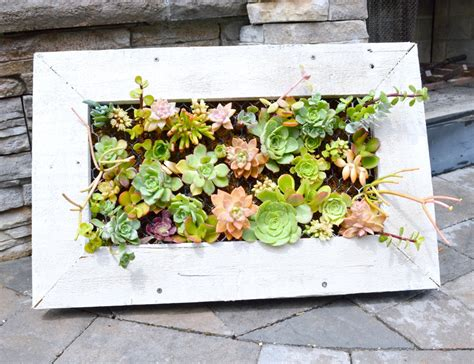 diy succulent planter diy hanging succulent planter my uncommon slice of suburbia