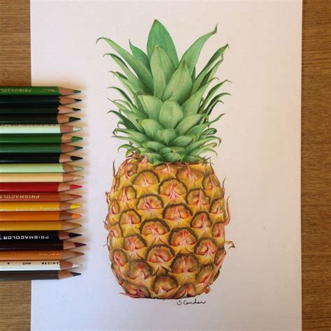 pineapple color pineapple drawing using prismacolor pencils
