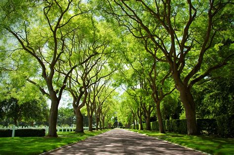 What Is A Tree Canopy Stress Falls As Exposure To Trees Increases Green Dreams