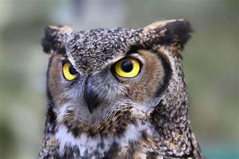 symbolism in the great gatsby owl eyes owl eyes symbolism in the great gatsby by lit genius editors