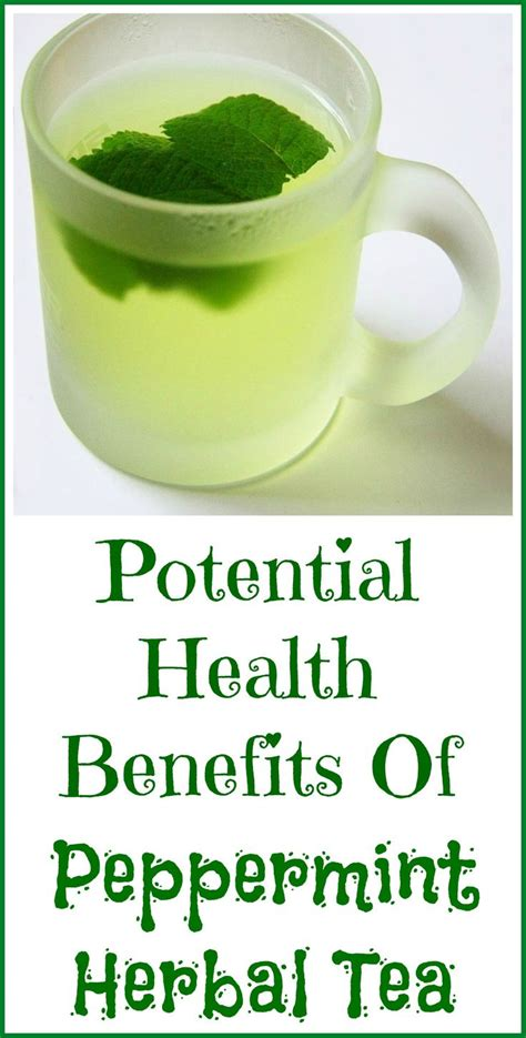 best 25 peppermint tea benefits ideas on pinterest peppermint tea tea and green tea advantages