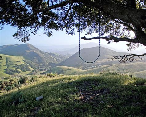california swing picture of the day the serenity swing 171 twistedsifter