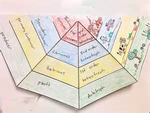 here s an example of an energy pyramid foldable science
