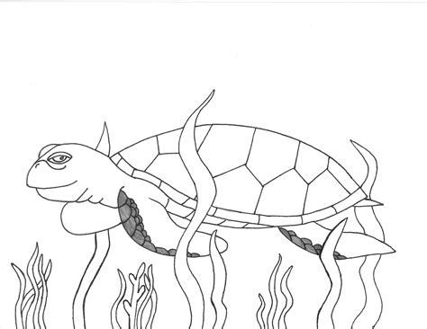 coloring pages loggerhead turtle drawn sea turtle water drawing pencil and in color drawn