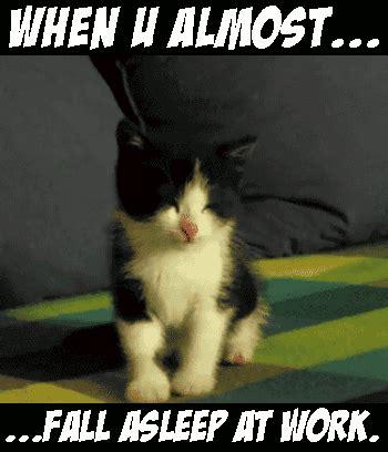 Falling Asleep Meme - gif falling asleep cat meme cat funny and cute