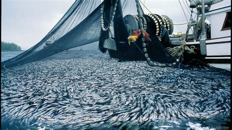 Petition · Protect Pacific Herring from DFO's ...