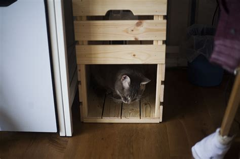 ikea cat bed ikea knagglig cat bed condo hack no extra tools parts