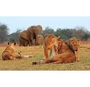 De La Foto Elefante Africano Fotos Animales Salvajes Africa