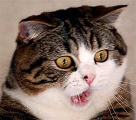 Shocked Cat Meme - shocked meme face reactions memes