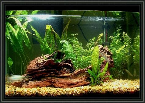 Decoration Of Aquarium by 20 Gallon Aquarium Decoration Ideas Aquariums Tanks