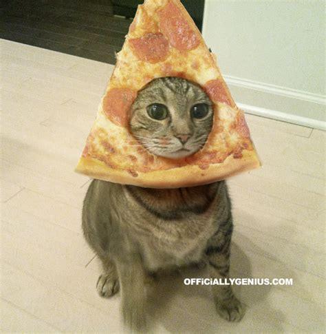 Cat In Bread Meme - pizza cat gt bread cat picture ebaum s world