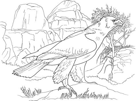 realistic eagle coloring pages free eagle coloring pages