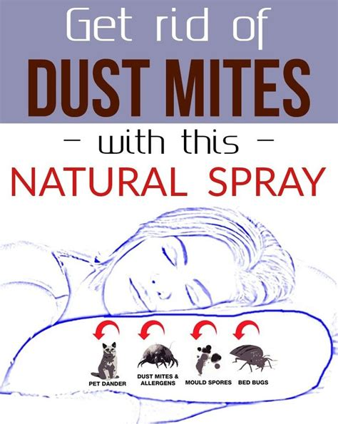 how to get rid of dust mites in bed 25 best ideas about dust mites on pinterest keep
