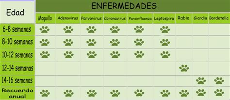 Calendario Canino Importancia Calendario De Vacunaci 243 N Perro Canal
