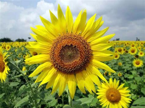gambar bunga cantik indah bagus comel foto