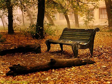 autumn park bench download autumn bench wallpaper