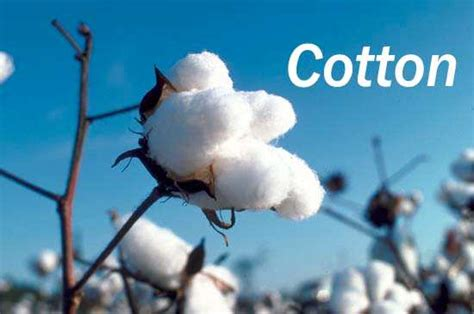 good cotton why does cotton kill section hikers backpacking blog
