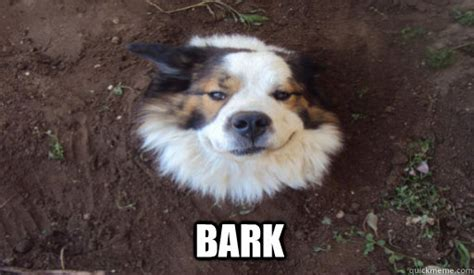bark tree dog quickmeme