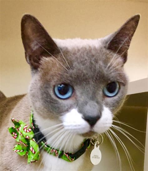 cat and clinic why is felv fiv testing important cat clinic arlington va cat only