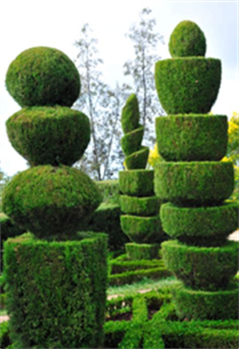 types of topiary trees box tree all about box trees