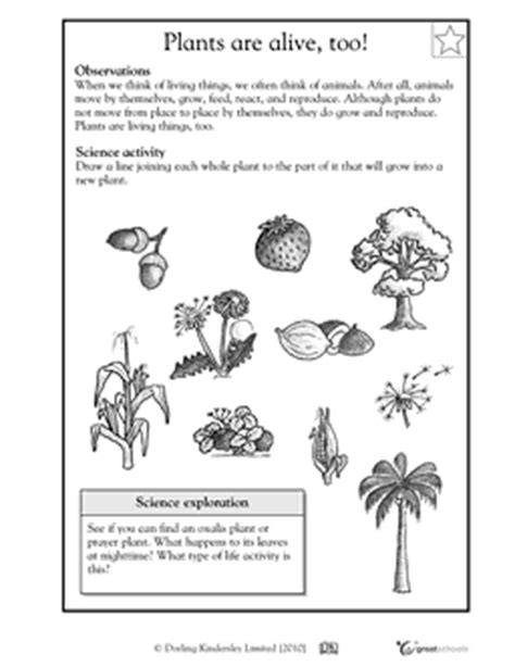 Second Grade Science Worksheets by Our 5 Favorite Prek Math Worksheets Great Schools