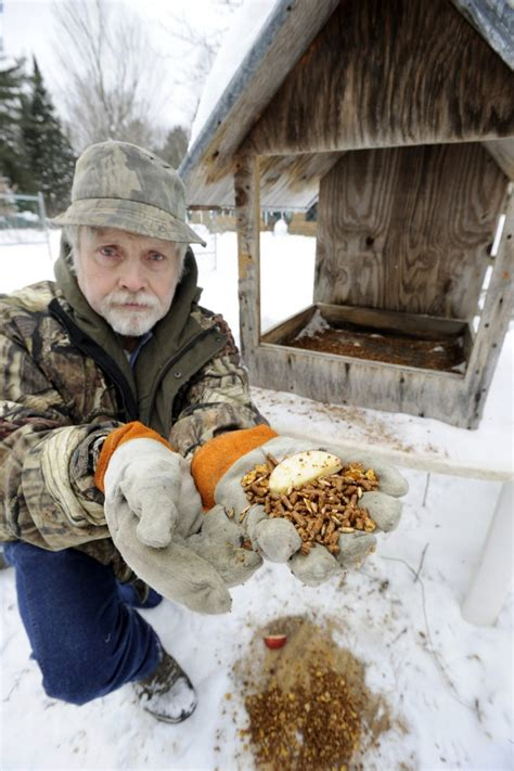 feed once a day feeding deer what s right portland press herald