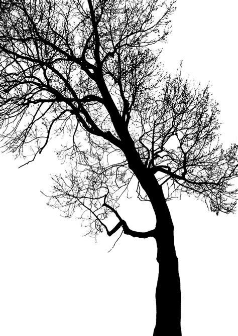 Twig Putih free images forest branch winter black and white