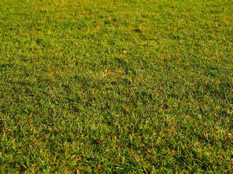 background rumput free images plant field lawn meadow prairie