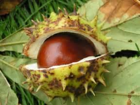 Fruit Tree Spikes - the horse chestnut tree the zone magazine