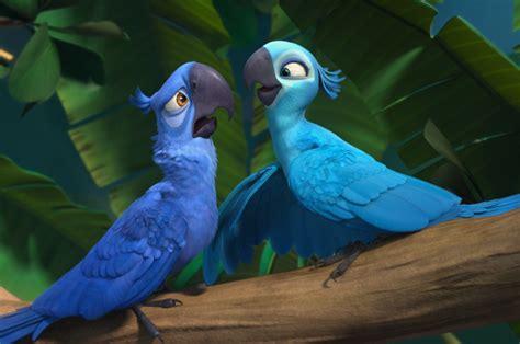 imagenes de guacamayas blancas nacen en brasil dos guacamayas azules esperanzas de su