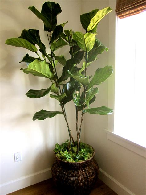 in house plant classic casual home real vs artificial house plants