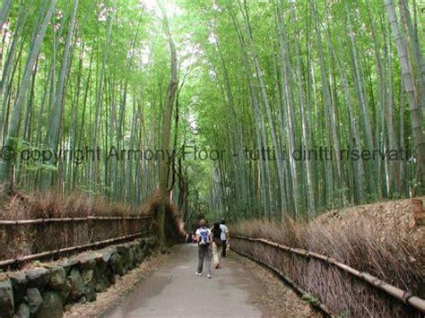 pavimento bamboo prezzo parquet bamboo prezzi pavimenti bambu