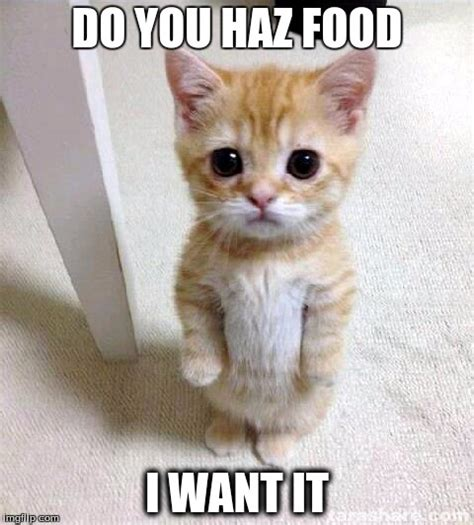 Food Cat Meme - hungry cat says gimme imgflip