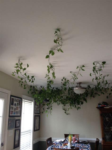 pin  kaddie adams  cozy home feel fake plants decor