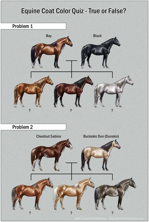 equine color calculator color charts quizes and charts on