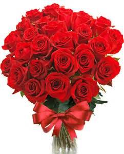rosas rojas image gallery imagenes con rosas