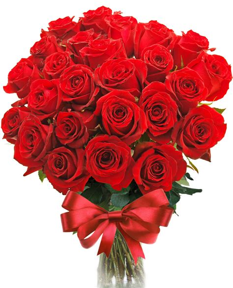 imagenes de rosas rojas hermosas image gallery imagenes con rosas