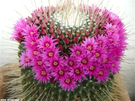 immagini di fiori e piante il concorso salottino di marzo 2015 fiori e piante di