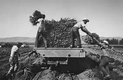Image result for Migrant worker