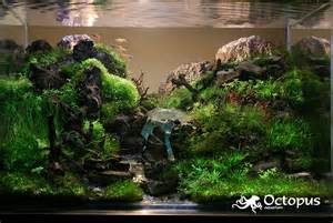 aquascaping archives beck designs