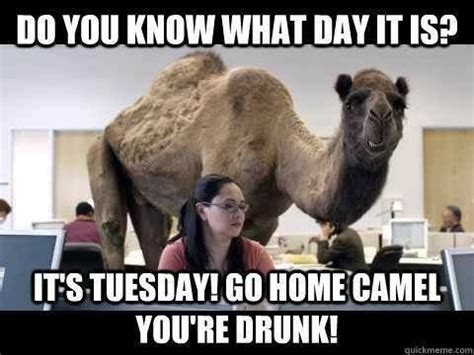 Funny Tuesday Meme - its tuesday go home camel you re drunk pictures photos