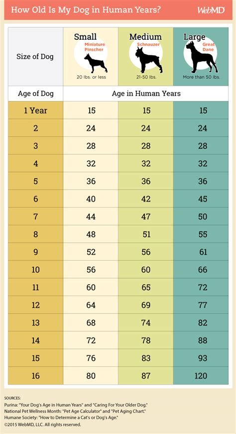 average age of dogs teeth age chart breeds picture