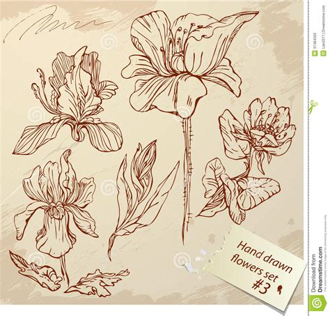 set of vintage realistic graphic flowers hand dr stock