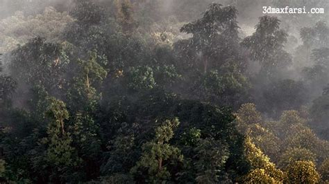 forest render 崧 綷 寘 寘 綷 3d max vray