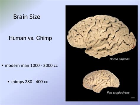 brain size the story of human evolution